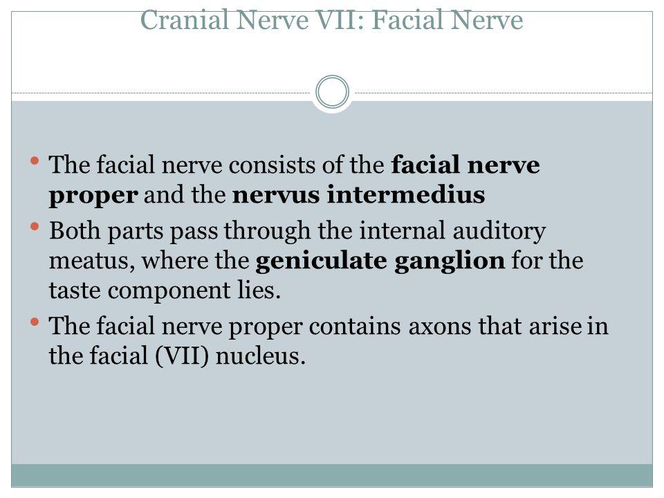 Cranial Nerve VII: Facial Nerve The facial nerve consists of the facial nerve proper and the nervus intermedius Both parts pass through the internal a