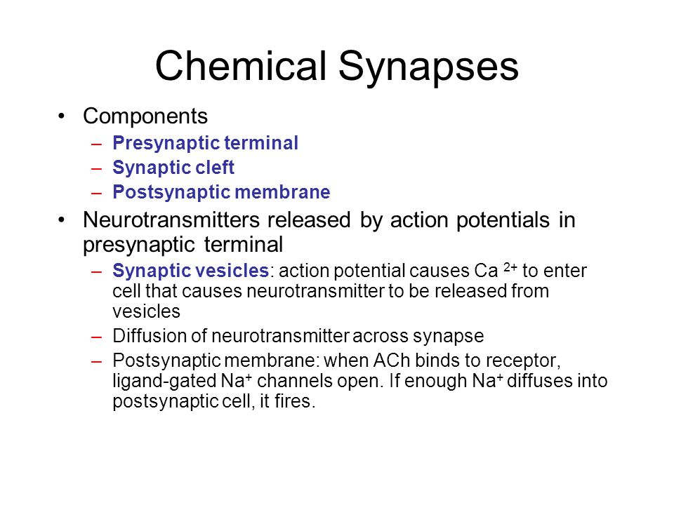 Chemical Synapse Events at a chemical synapse 1.