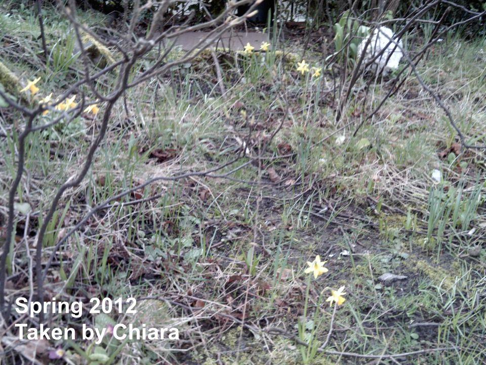Spring 2012 Taken by Chiara