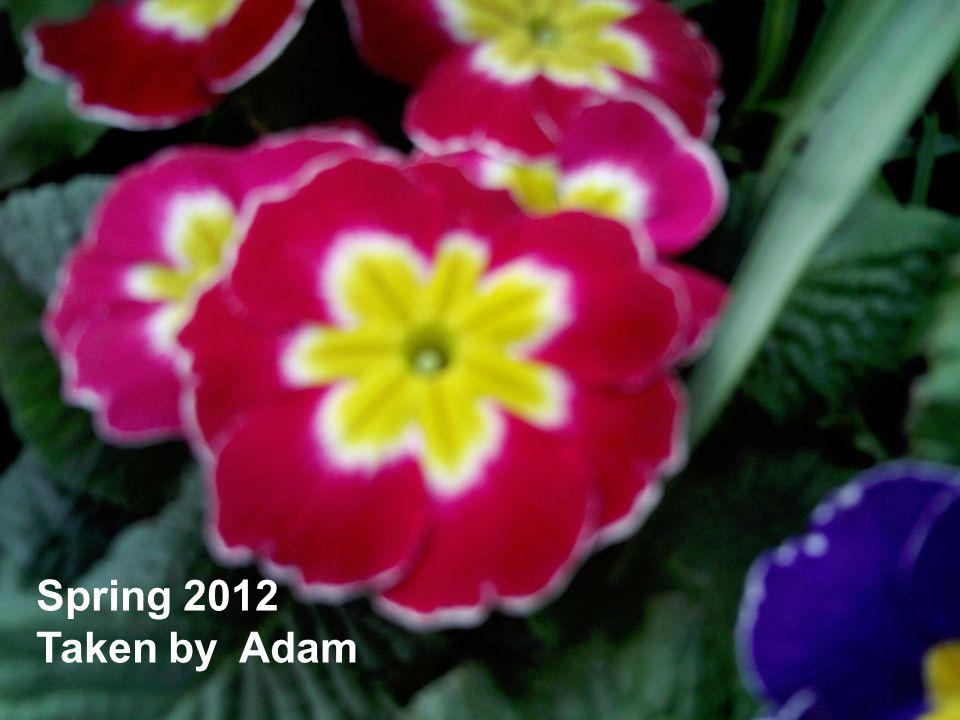 Spring 2012 Taken by Adam