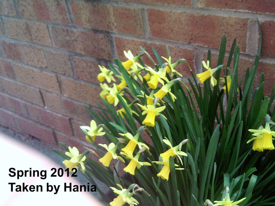 Spring 2012 Taken by Hania