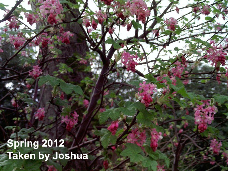 Spring 2012 Taken by Joshua