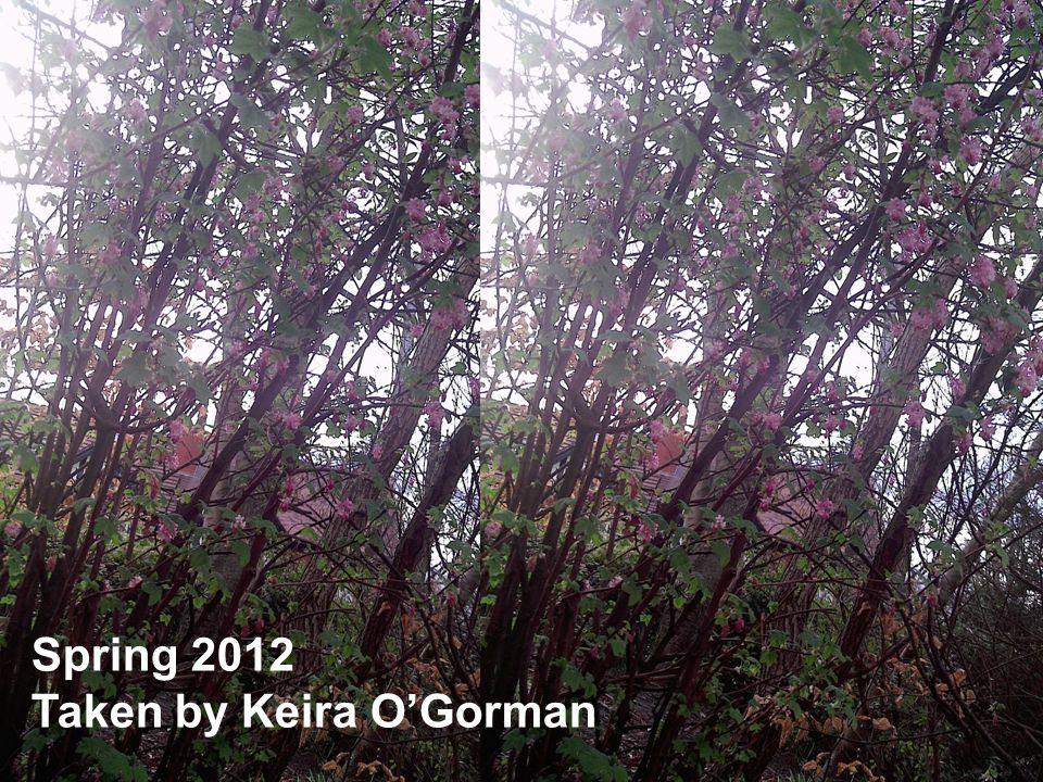 Spring 2012 Taken by Keira O'Gorman