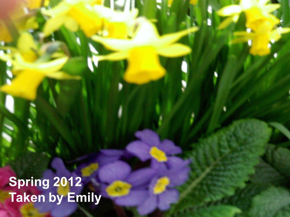 Spring 2012 Taken by Emily