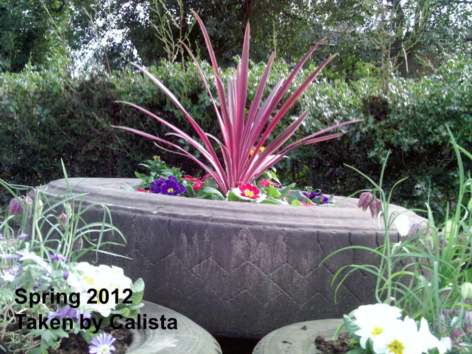 Spring 2012 Taken by Calista
