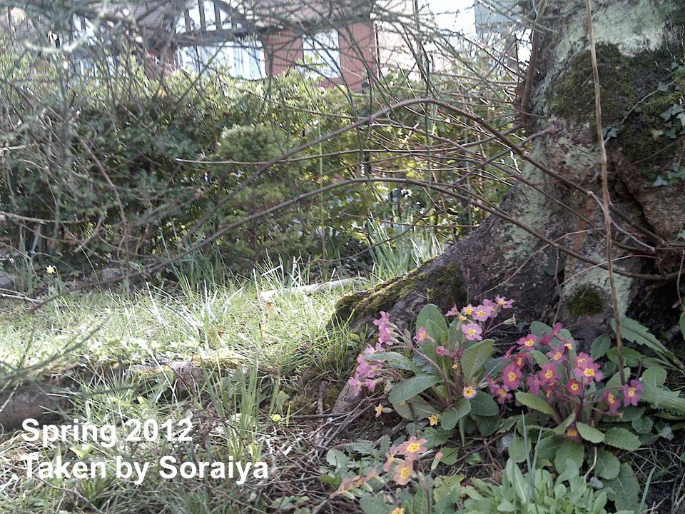 Spring 2012 Taken by Soraiya