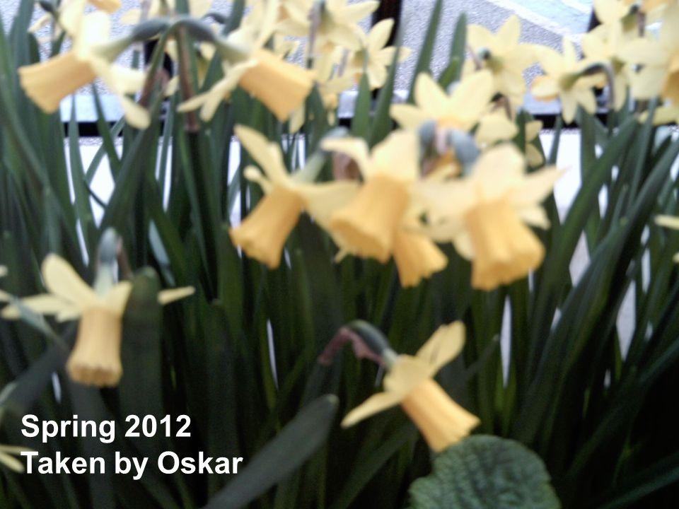 Spring 2012 Taken by Oskar