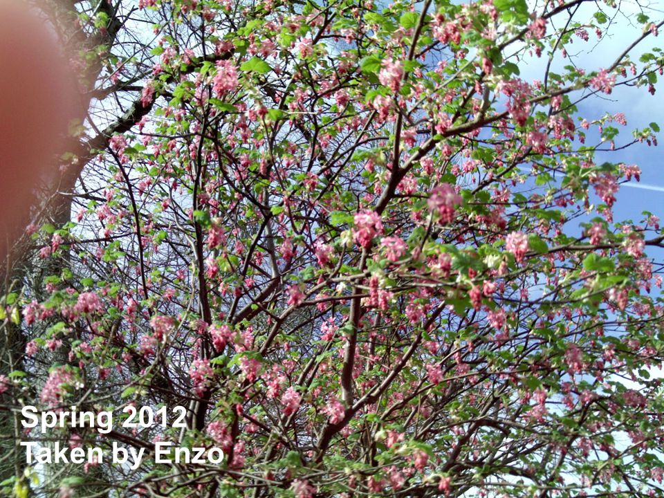Spring 2012 Taken by Enzo