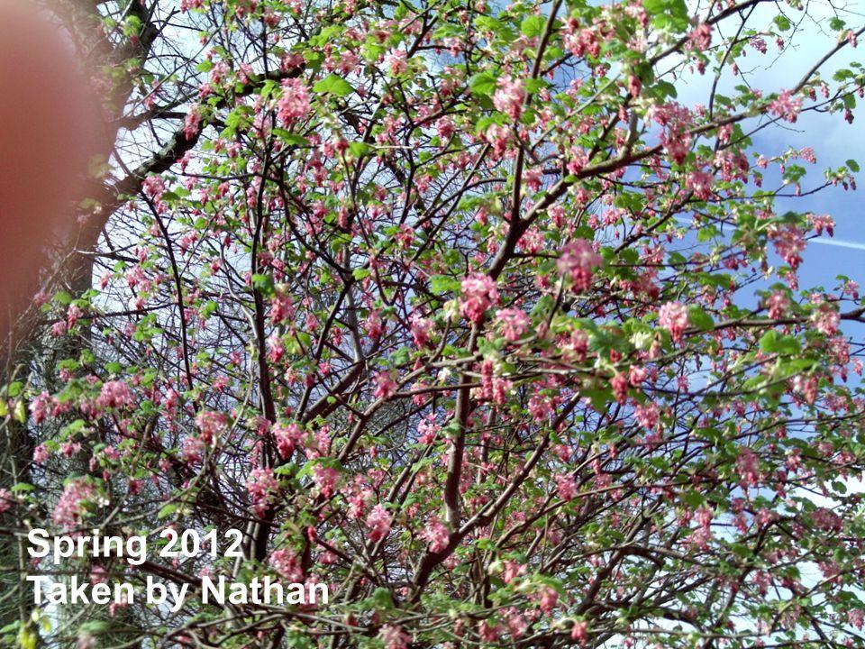 Spring 2012 Taken by Nathan