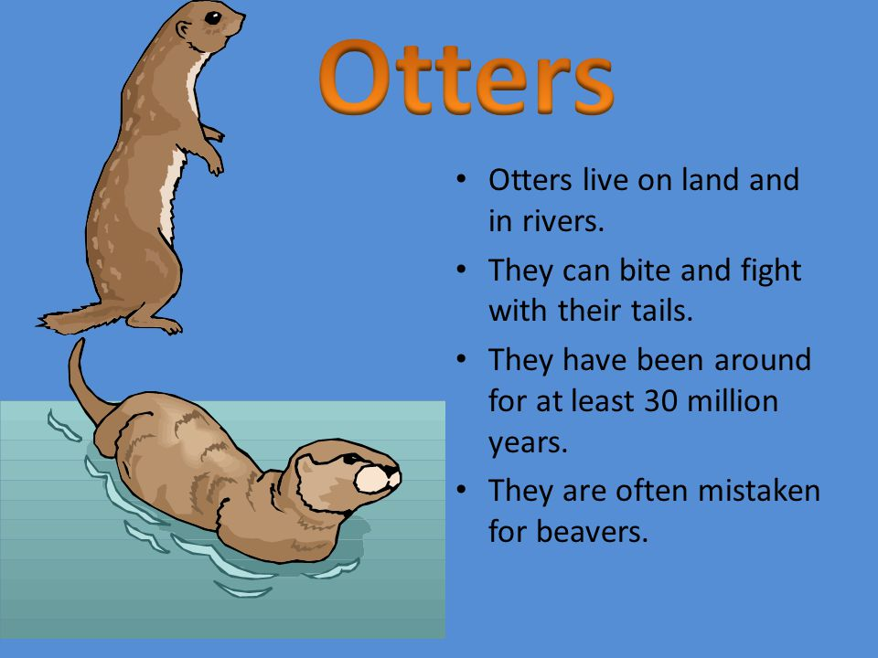 Otters live on land and in rivers. They can bite and fight with their tails.
