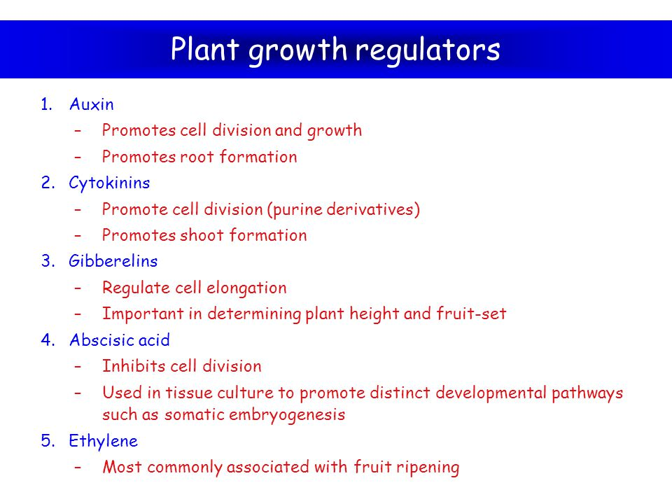Plant growth regulators 1.Auxin –Promotes cell division and growth –Promotes root formation 2.Cytokinins –Promote cell division (purine derivatives) –