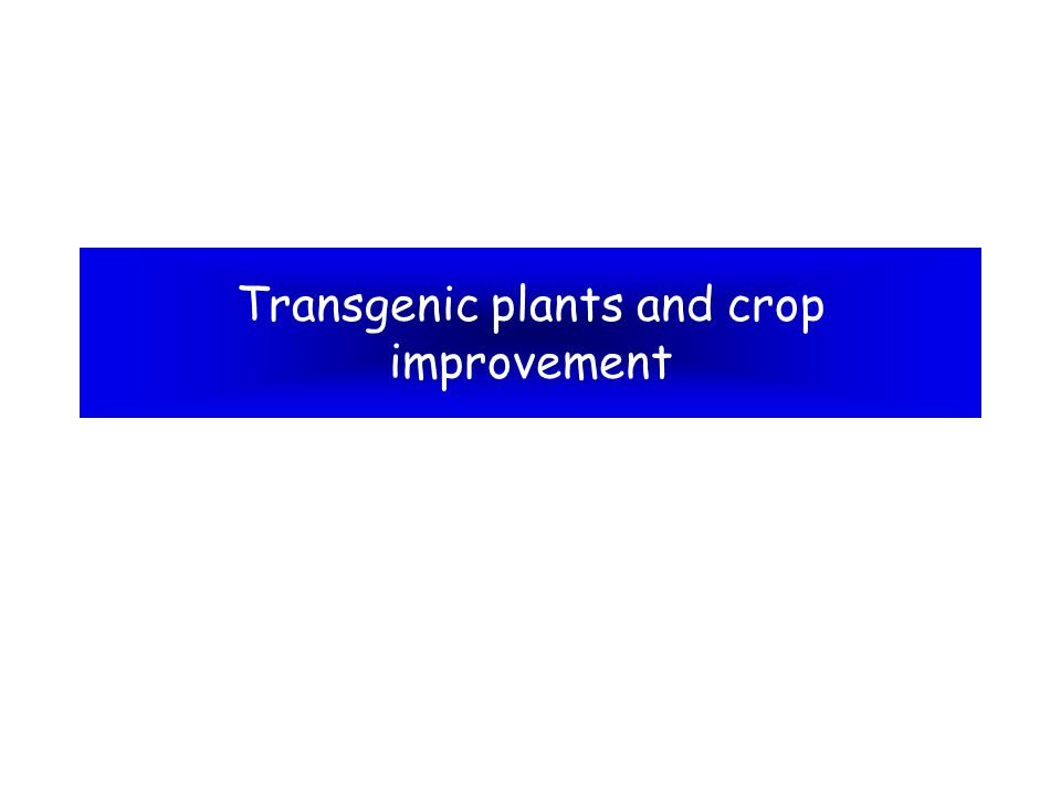 What is a transgenic.