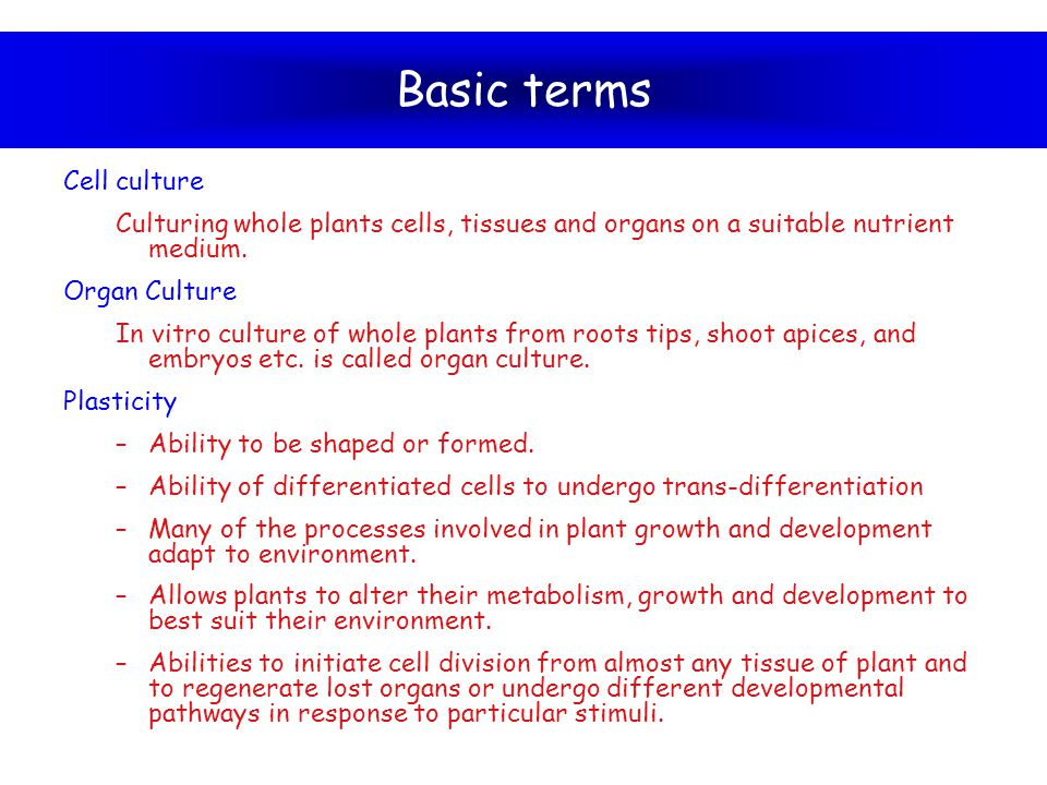 Basic terms Cell culture Culturing whole plants cells, tissues and organs on a suitable nutrient medium. Organ Culture In vitro culture of whole plant