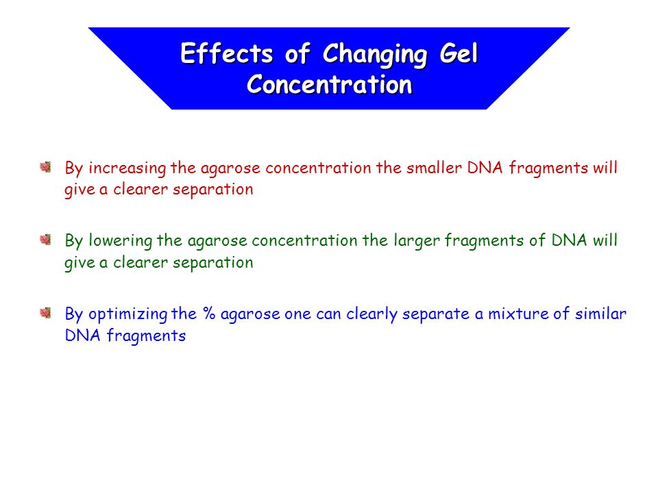 By increasing the agarose concentration the smaller DNA fragments will give a clearer separation By lowering the agarose concentration the larger frag