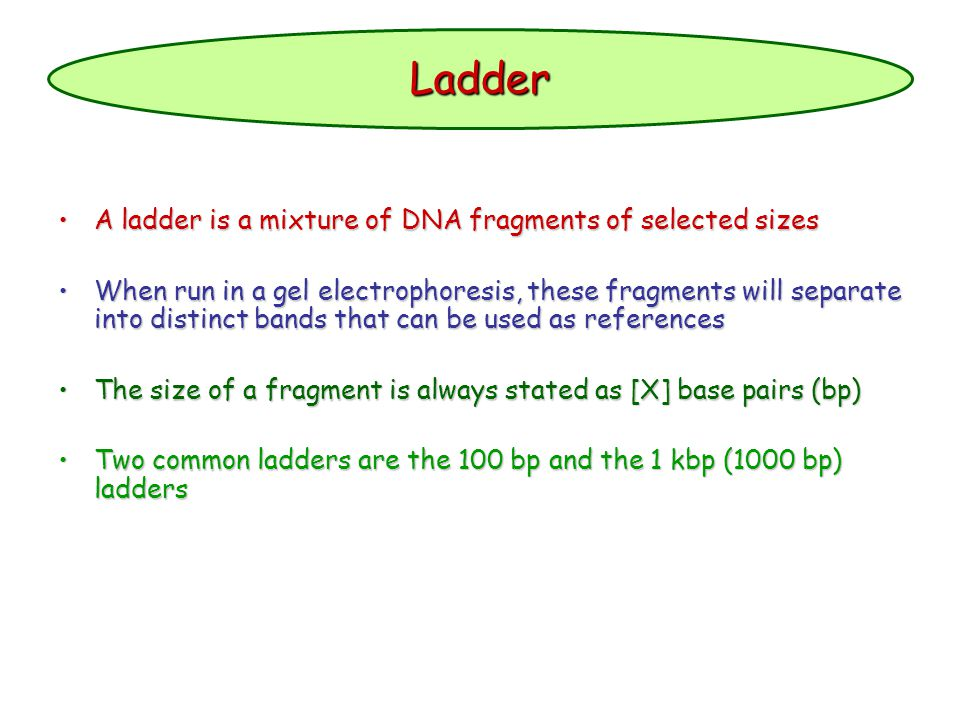 Ladder A ladder is a mixture of DNA fragments of selected sizesA ladder is a mixture of DNA fragments of selected sizes When run in a gel electrophore
