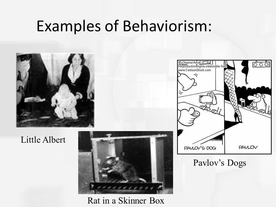 Examples of Behaviorism: Little Albert Rat in a Skinner Box Pavlov's Dogs