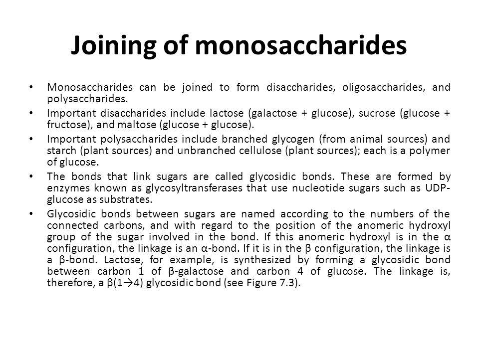 Joining of monosaccharides Monosaccharides can be joined to form disaccharides, oligosaccharides, and polysaccharides. Important disaccharides include