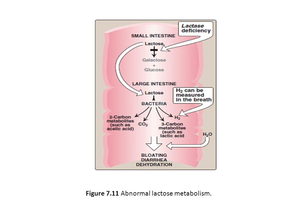Figure 7.11 Abnormal lactose metabolism.