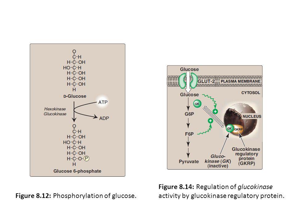 Figure 8.12: Phosphorylation of glucose. Figure 8.14: Regulation of glucokinase activity by glucokinase regulatory protein.