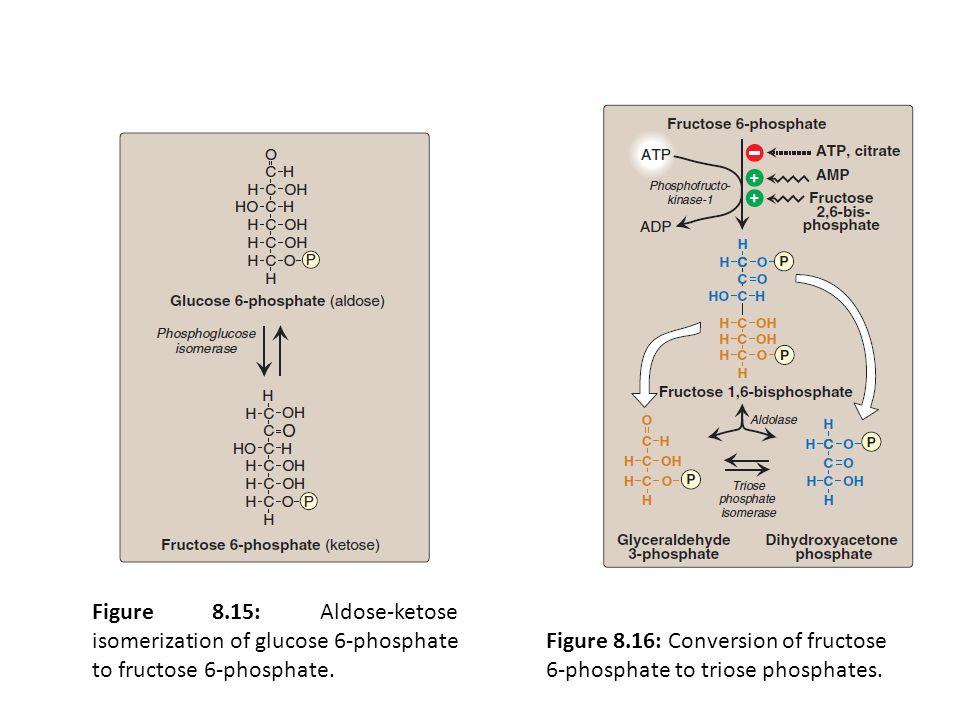 Figure 8.15: Aldose-ketose isomerization of glucose 6-phosphate to fructose 6-phosphate. Figure 8.16: Conversion of fructose 6-phosphate to triose pho