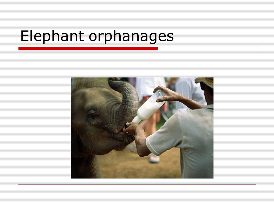 Elephant orphanages