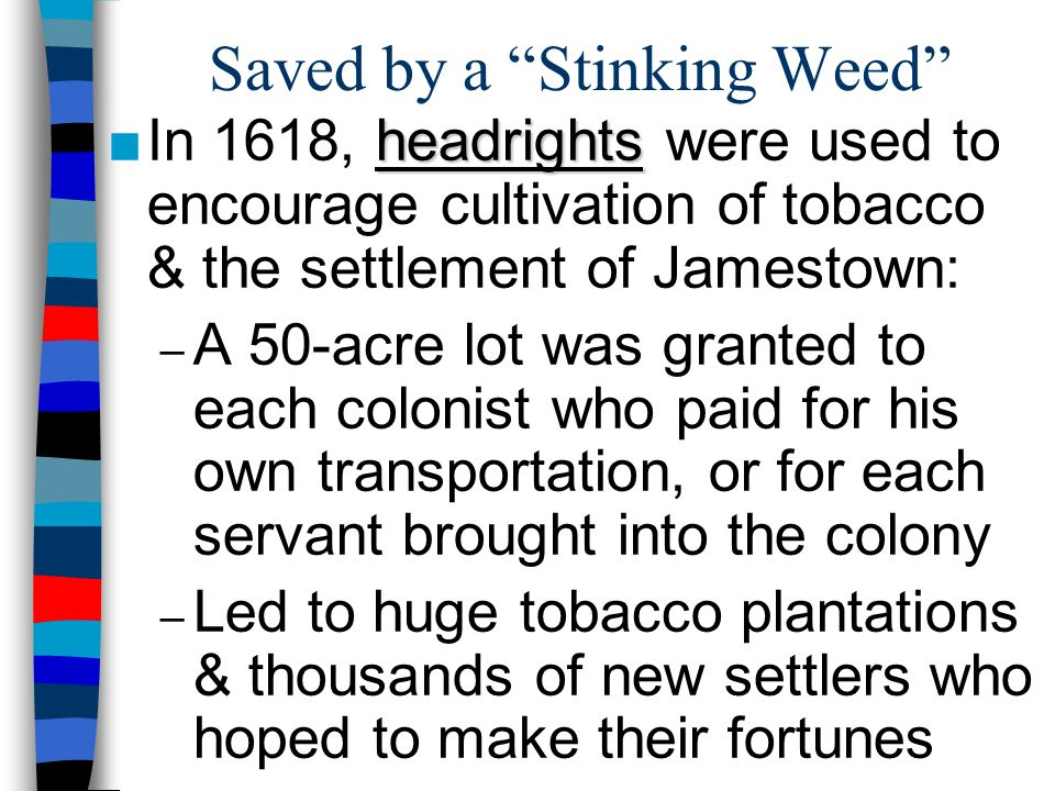 """Saved by a """"Stinking Weed"""" headrights ■In 1618, headrights were used to encourage cultivation of tobacco & the settlement of Jamestown: – A 50-acre lo"""