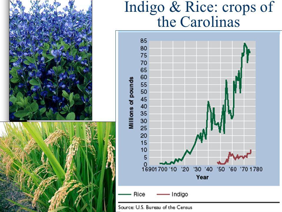 Indigo & Rice: crops of the Carolinas
