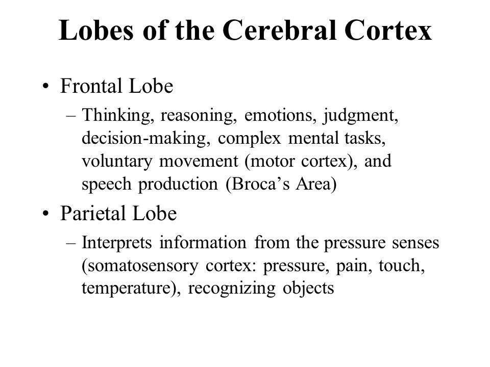 Lobes of the Cerebral Cortex Frontal Lobe –Thinking, reasoning, emotions, judgment, decision-making, complex mental tasks, voluntary movement (motor c
