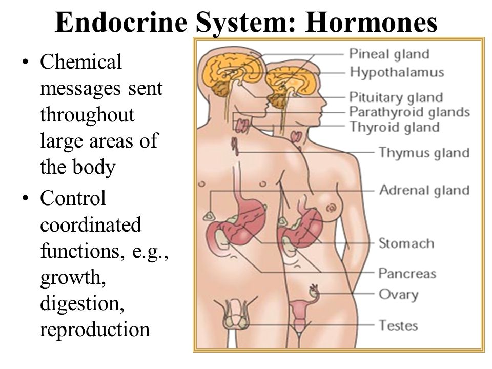 Endocrine System: Hormones Chemical messages sent throughout large areas of the body Control coordinated functions, e.g., growth, digestion, reproduct