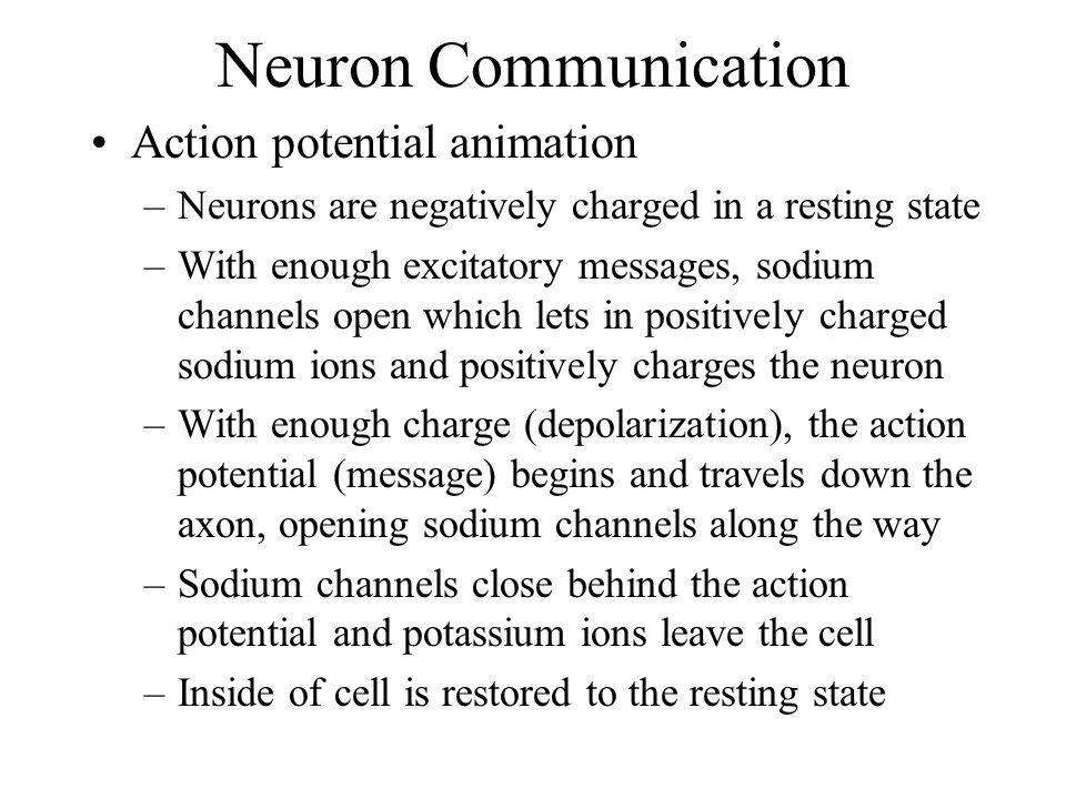 Neuron Communication Action potential animation –Neurons are negatively charged in a resting state –With enough excitatory messages, sodium channels o