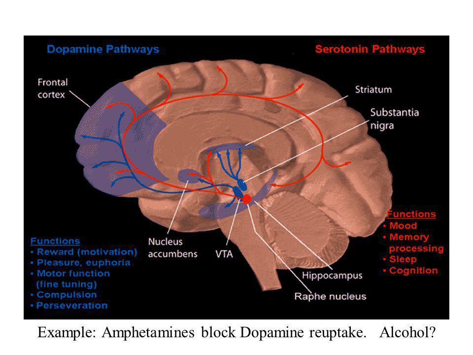 Example: Amphetamines block Dopamine reuptake. Alcohol?