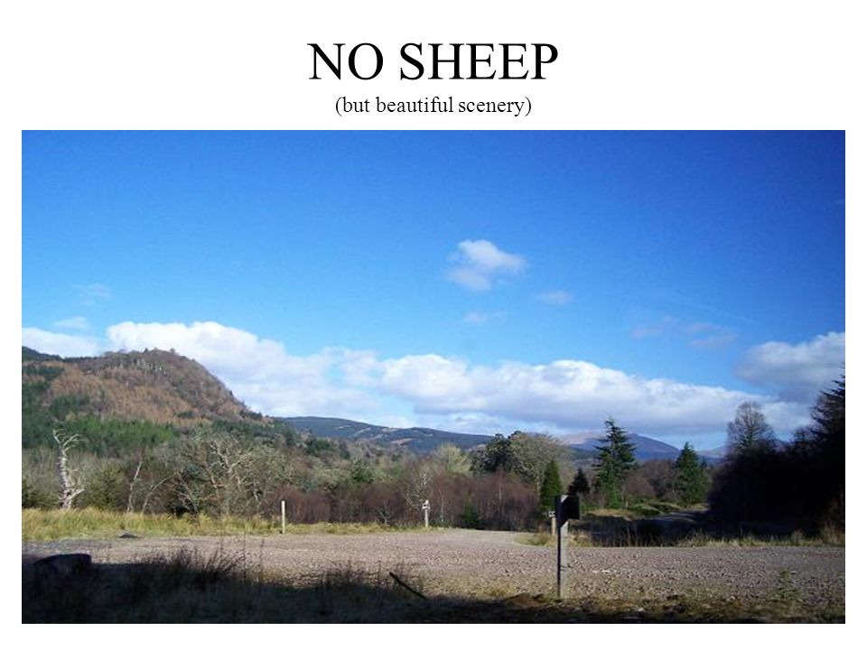 NO SHEEP (but beautiful scenery)