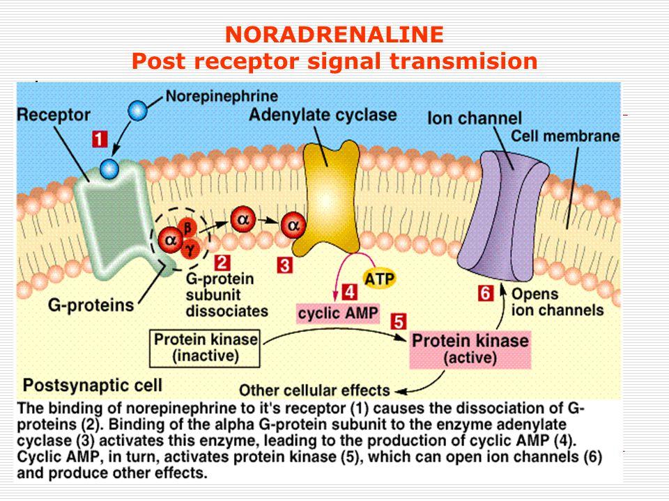 10 NORADRENALINE Post receptor signal transmision 1.