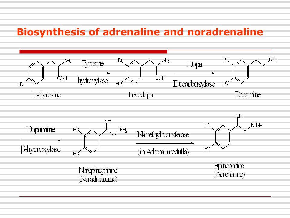 7 Adrenergics Receptors
