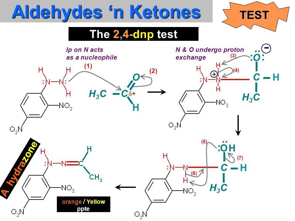 H Aldehydes 'n Ketones TEST The 2,4-dnp test O H C H3CH3C (1) (2) lp on N acts as a nucleophile..