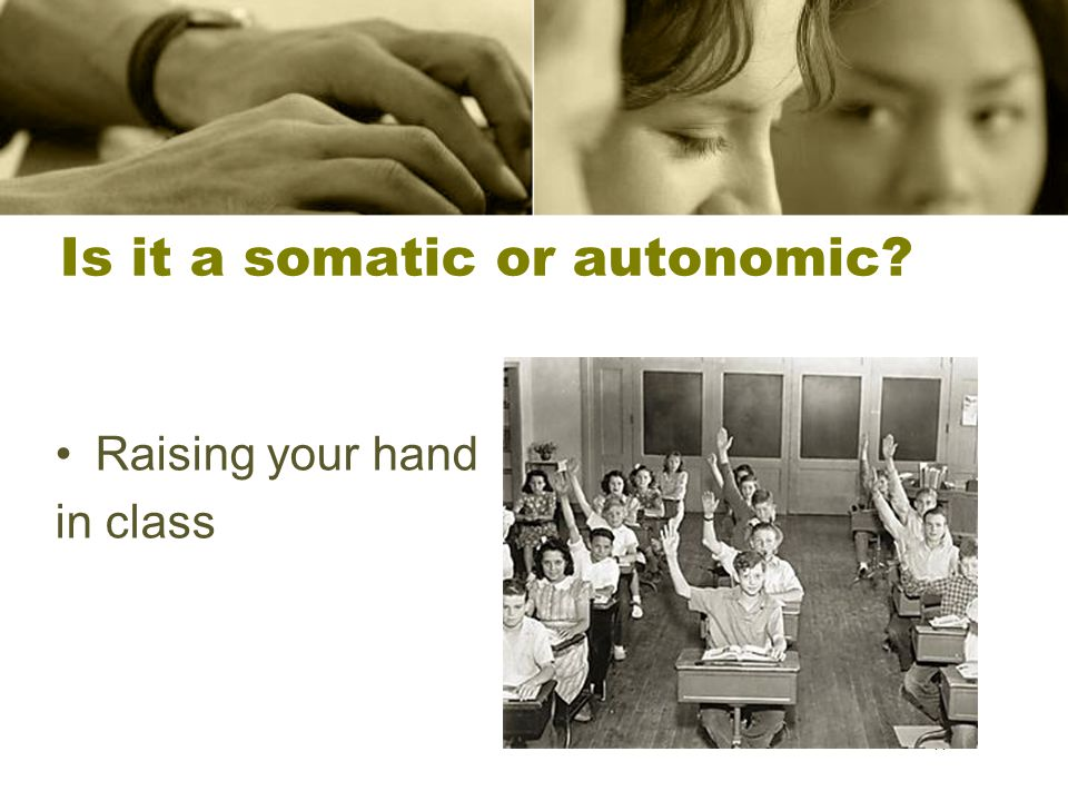 11 Is it a somatic or autonomic? Raising your hand in class 11