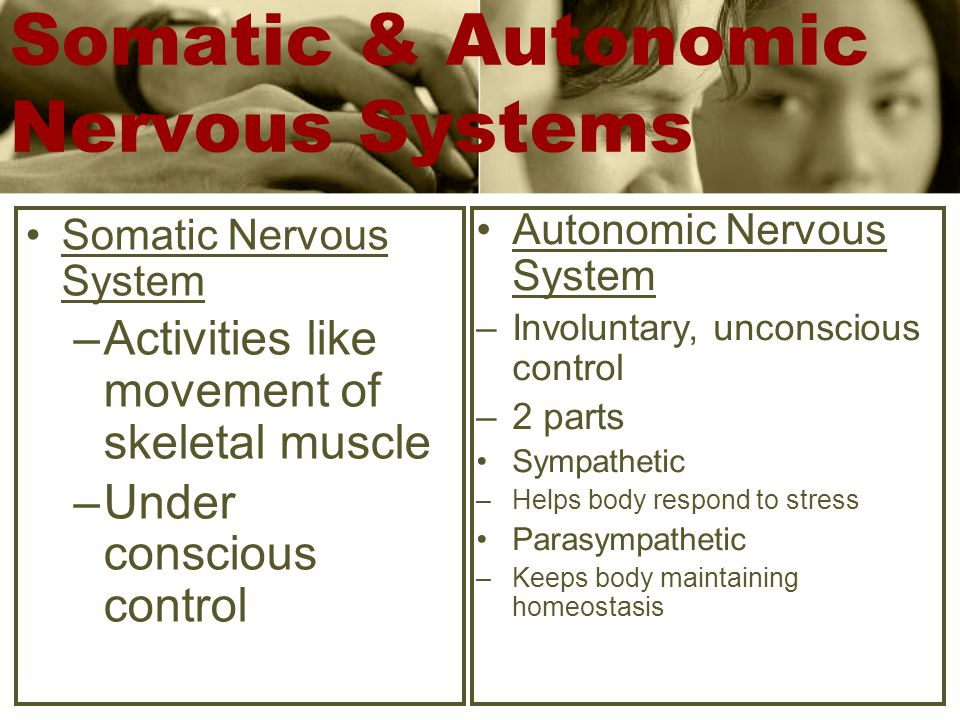 Somatic & Autonomic Nervous Systems Somatic Nervous System –Activities like movement of skeletal muscle –Under conscious control Autonomic Nervous System –Involuntary, unconscious control –2 parts Sympathetic –Helps body respond to stress Parasympathetic –Keeps body maintaining homeostasis