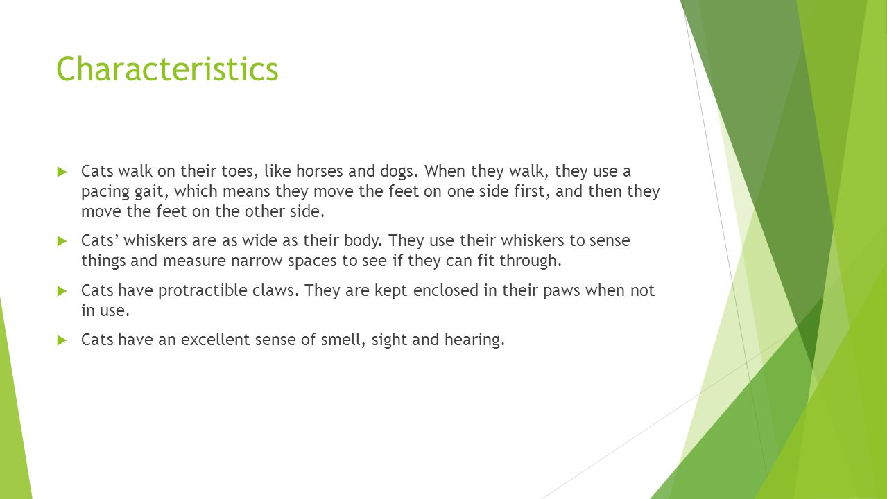 Characteristics  Cats walk on their toes, like horses and dogs.
