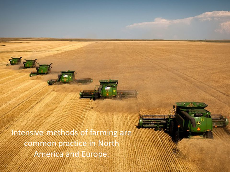 Intensive methods of farming are common practice in North America and Europe.
