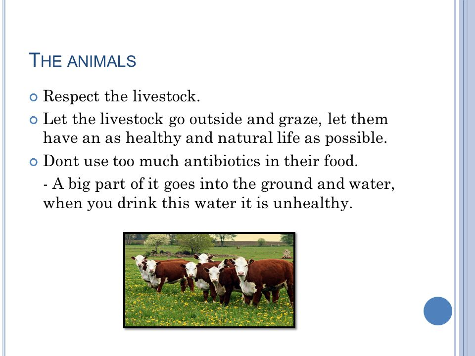 T HE ANIMALS Respect the livestock.