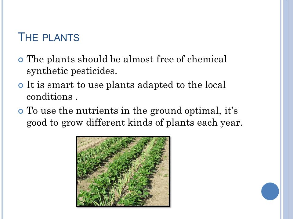 T HE PLANTS The plants should be almost free of chemical synthetic pesticides.
