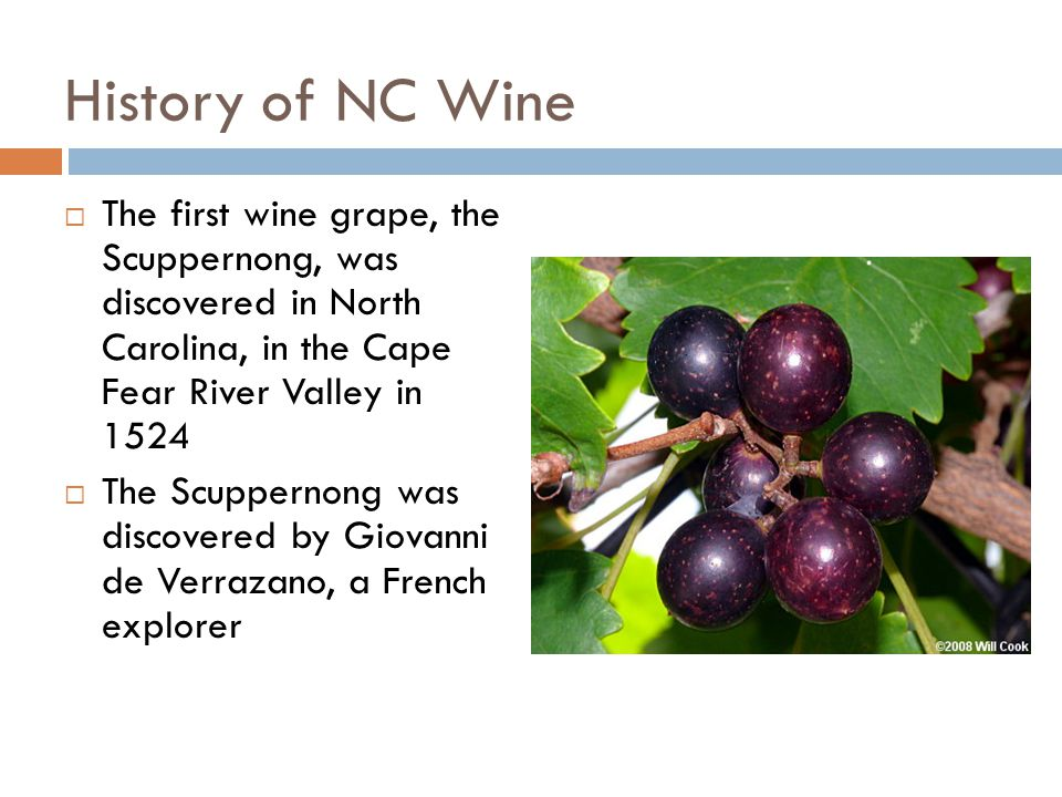History of NC Wine  The first wine grape, the Scuppernong, was discovered in North Carolina, in the Cape Fear River Valley in 1524  The Scuppernong was discovered by Giovanni de Verrazano, a French explorer