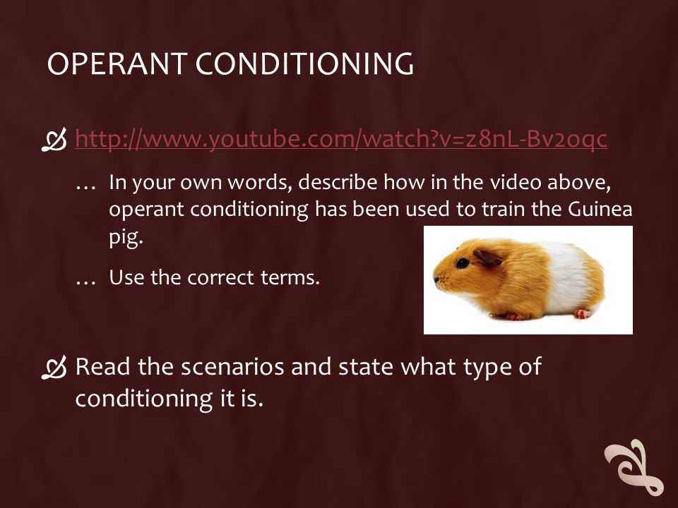 OPERANT CONDITIONING  http://www.youtube.com/watch?v=z8nL-Bv2oqc http://www.youtube.com/watch?v=z8nL-Bv2oqc … In your own words, describe how in the