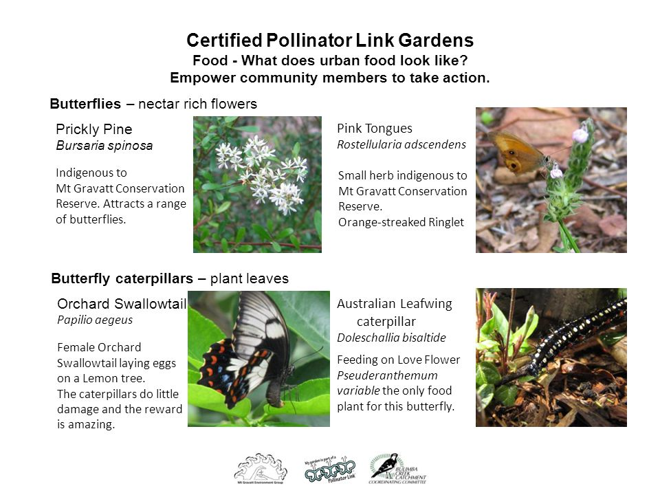 Certified Pollinator Link Gardens Food - What does urban food look like.