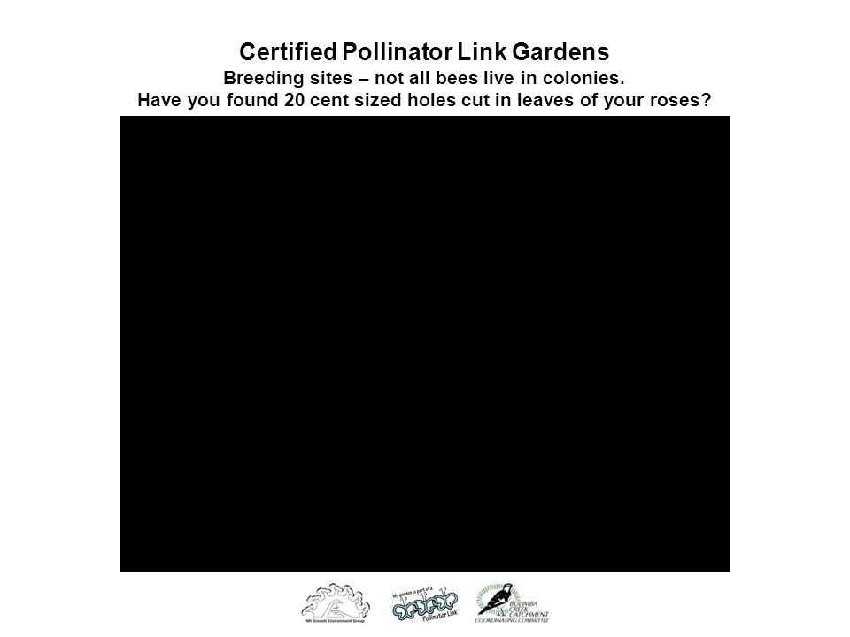 Certified Pollinator Link Gardens Breeding sites – not all bees live in colonies.
