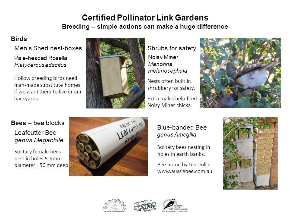 Certified Pollinator Link Gardens Breeding – simple actions can make a huge difference Leafcutter Bee genus Megachile Solitary female bees nest in holes 5-9mm diameter 150 mm deep Bees – bee blocks Birds Pale-headed Rosella Platycercus adscitus Hollow breeding birds need man-made substitute homes if we want them to live in our backyards.