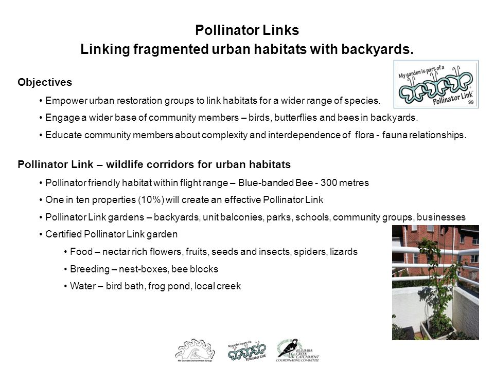 Pollinator Links Linking fragmented urban habitats with backyards.