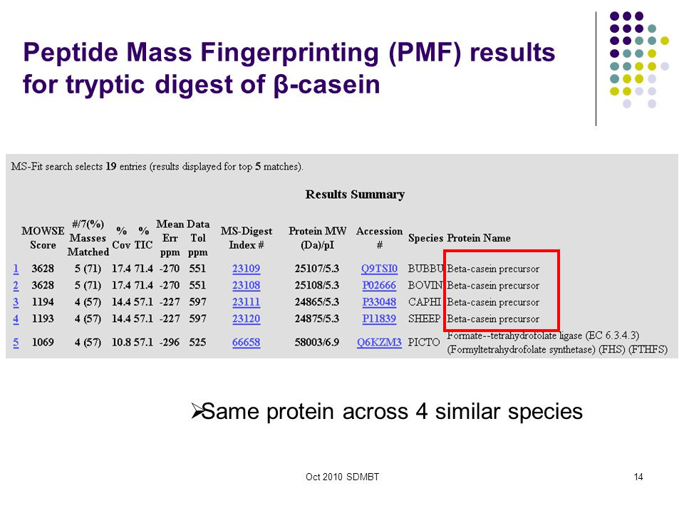 Oct 2010 SDMBT Peptide Mass Fingerprinting (PMF) results for tryptic digest of β-casein  Same protein across 4 similar species 14