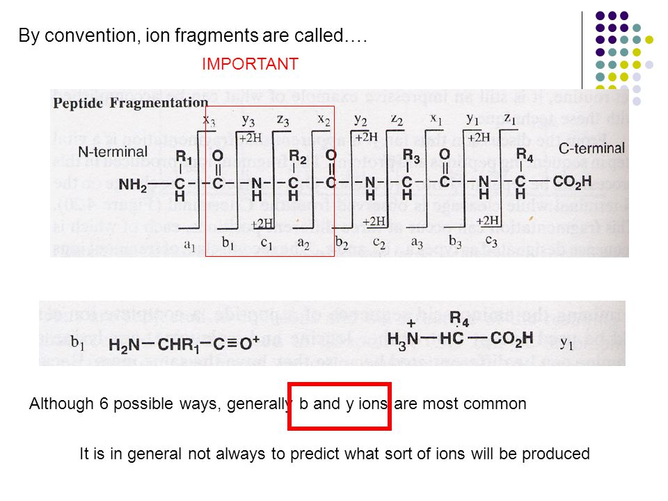 IMPORTANT Although 6 possible ways, generally b and y ions are most common By convention, ion fragments are called….