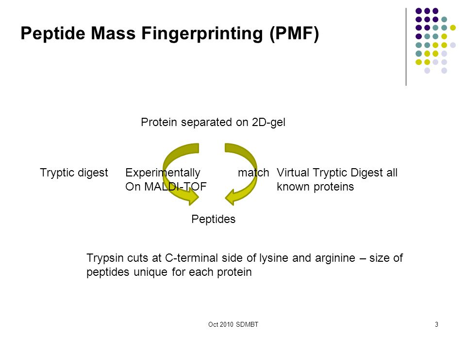 Oct 2010 SDMBT3 Peptides Protein separated on 2D-gel Tryptic digestVirtual Tryptic Digest all known proteins Trypsin cuts at C-terminal side of lysine and arginine – size of peptides unique for each protein Peptide Mass Fingerprinting (PMF) Experimentally On MALDI-TOF match